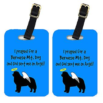 Carolines Treasures  AN1117BT Pair of 2 Bernese Mountain Dog Luggage Tags