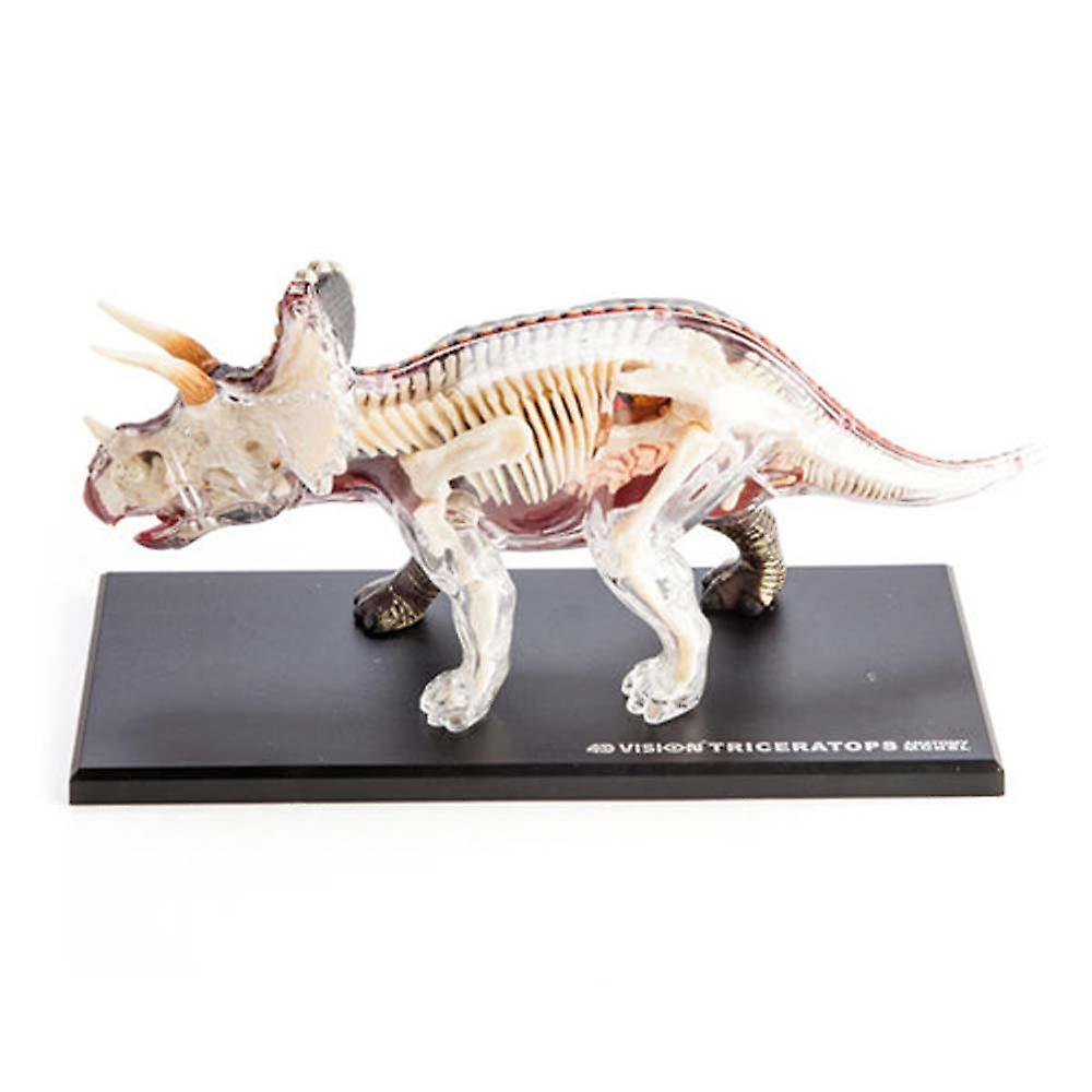 4D Anatomy Triceratops Dinosaur