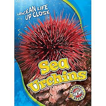Sea Urchins (Ocean Life Up� Close)