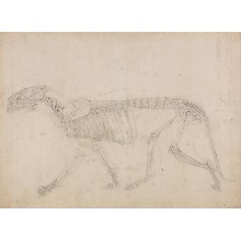 George Stubbs - Anatomical Structure of A Body Bones Poster Print Giclee