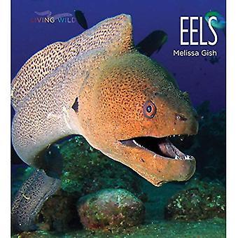 Anguilles (vie sauvage)