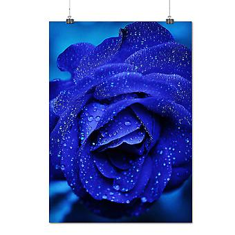 Matte or Glossy Poster with Blue Rose Beautiful Nature Earth Life | Wellcoda | *q1129