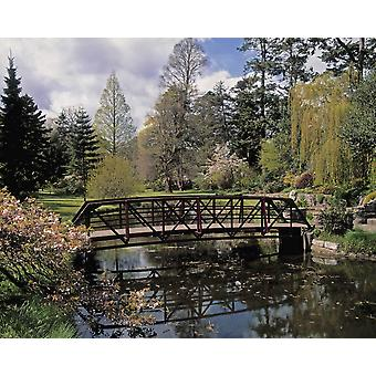Irish National Botanic Gardens Dublin Co Dublin Irland Brücke über Lily Lake PosterPrint