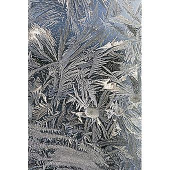 Frost-Kristalle auf einem Fenster Calgary Alberta Kanada PosterPrint
