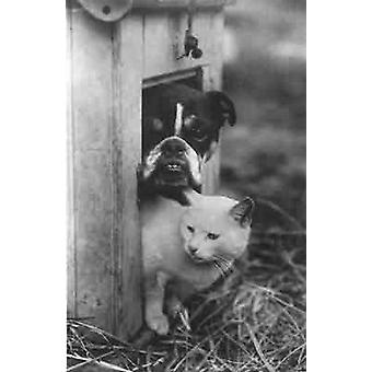 Bulldog & Cat sharing the dog kennel, thats friendship for you! Greetings Card