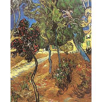 Bäume im Garten von Saint-Paul Hospital, Vincent Van Gogh, 73x60cm