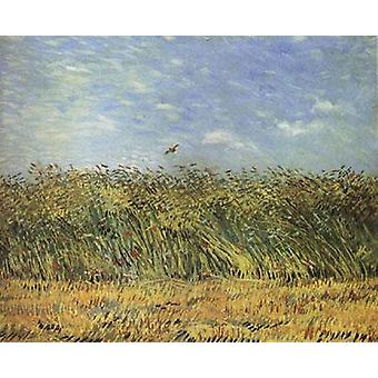 Wheat Field with a Lark, Vincent Van Gogh, 54 x 65.5 cm
