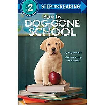 Tillbaka till hund-gått skolan (steg i behandlingen)