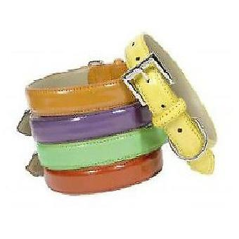 Doggy Things CHAROL AMARILLO COLLAR (Dogs , Walking Accessories , Collars)