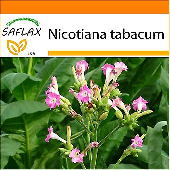 Saflax - Garden in the Bag - 250 seeds - Common Tobacco - Tabac - Pianta del tabacco - Tabaco de Virginia - Echter Virginischer Tabak