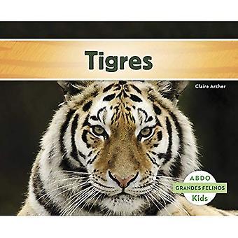 Tigres (Grandes Felinos)