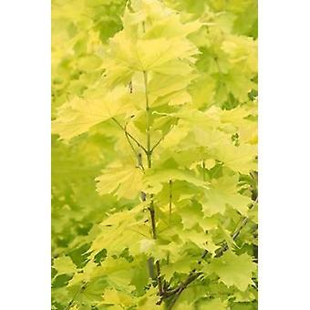 Весенние листья III плакат печати Рамона Мердока