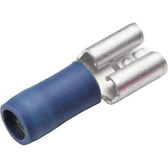 Blade receptacle Connector width: 4.8 mm Connector thickness: 0.8 mm