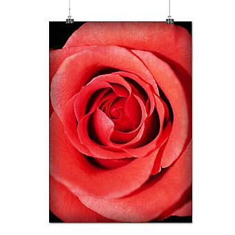 Matte or Glossy Poster with Rose Art Picture Nature Nice Flower | Wellcoda | *q1181