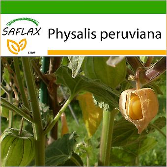 Saflax - 100 seeds - With soil - Cape Gooseberry / Peruvian Cherry - Coqueret du Pérou - Alchechengio peruviano - Aguaymanto - Kapstachelbeere / Andenbeere