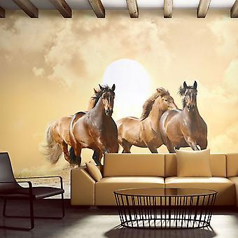 Tapet - kører heste