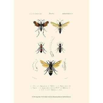 Antieke bijen ik Poster Print by Olivia Blanchard (10 x 13)
