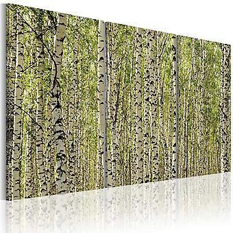 Canvas Print - A forest of birch trees