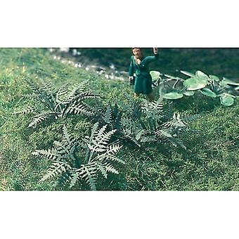 MBZ 86025 Z Fern, 20 Plants
