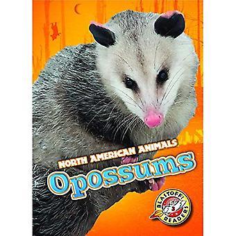 Opossums (North American Animals)
