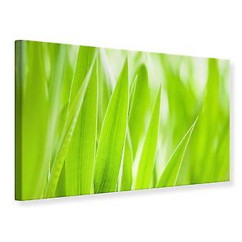 Canvas Print Grass XXL
