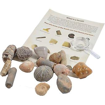 British Fossils Fossil Collection Kit