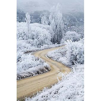 Hoar Frost and Road by Butchers Dam South Island New Zealand Poster Print by David Wall