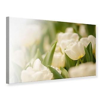 Perspectiva do Tulip impressão da lona
