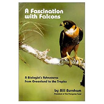 Fascination with Falcons