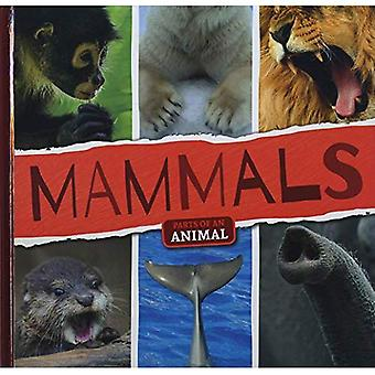 Mammifères (parties d'un Animal)