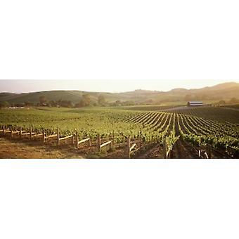 Vista panoramica dei vigneti Carneros District Napa Valley California Stati UNITI Poster Print