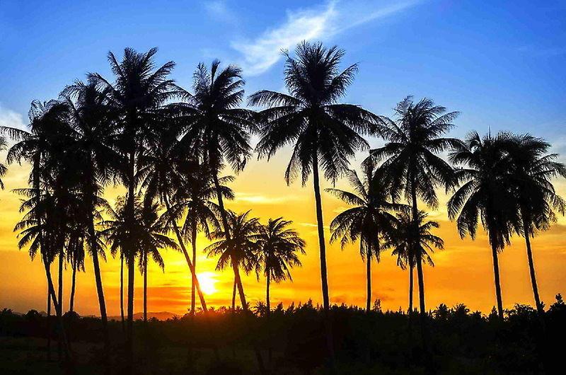 Fond d'écran mural noix de coco palmiers
