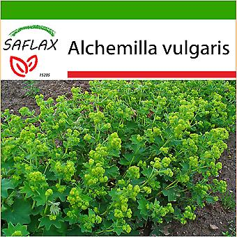 Saflax - 100 seeds - With soil - Lady's Mantle - Alchémille commune - Erba stella - Pie de león - Frauenmantel