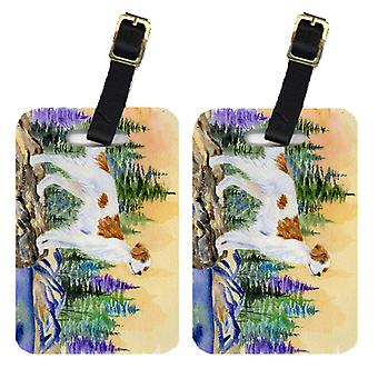 Carolines Treasures  SS8146BT Pair of 2 Setter Luggage Tags