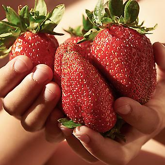 Pack of 6 Giant Strawberry 'Sweet Colossus' Plants Grow Your Own