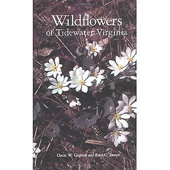 Wild Flowers of Tidewater Virginia