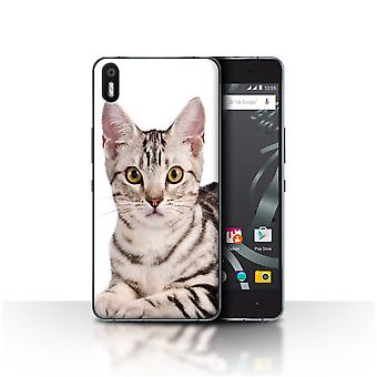 STUFF4 Custodia/Cover per BQ Aquaris X 5/American Shorthair/gatto razze