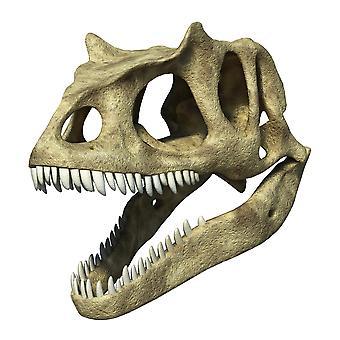 3D rendering van de schedel van een Allosaurus Poster Print