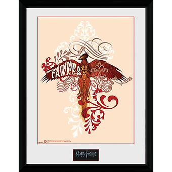 Harry Potter Fawkes Collector Print