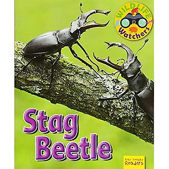 Wildlife Watchers: Stag Beetle: 2017 (Ruby Tuesday Readers)
