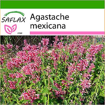 Saflax - 50 seeds - With soil - Mexican Giant Hyssop - Agastache mexicaine - Anice menta messicana - Toronjil morado - Limonen - Aniskraut