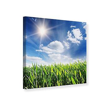 Canvas Print voorjaar Grass