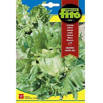 Semillas Fitó Lettuce large juli lakes (Garden , Gardening , Seeds)