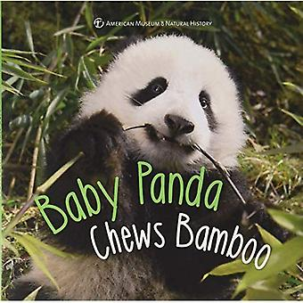 Baby Panda Chews Bamboo (First Discoveries)