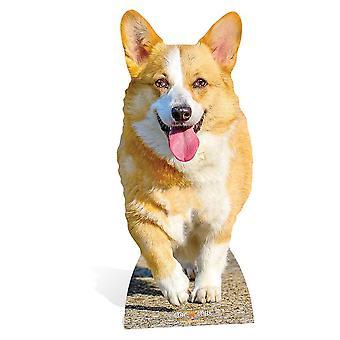 Sagoma di cartone di Corgi Dog Lifesized / Standee / Stand up / Standee