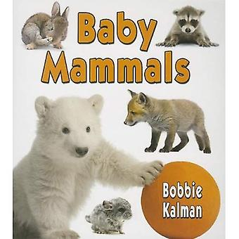 Baby Mammals (It's Fun to Learn about Baby Animals)