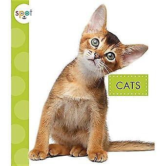 Cats (Spot Pets)