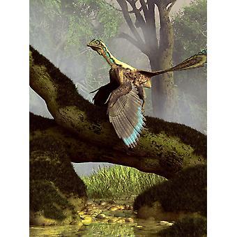 Um Archaeopteryx num tronco acima um fluxo Poster Print