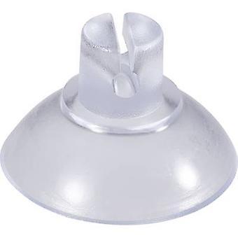 Suction cup Clear, Transparent Kash 20 pc(s)