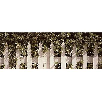 White picket fence surrounded by bushes along Truman Avenue Key West Monroe County Florida USA Poster Print